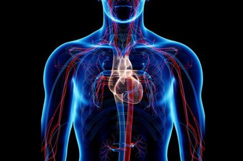 circulator_system